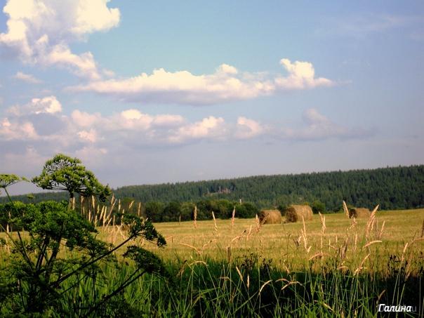 Лето. По дороге с сероводородному источнику. Природа Ухты и Коми Ухта