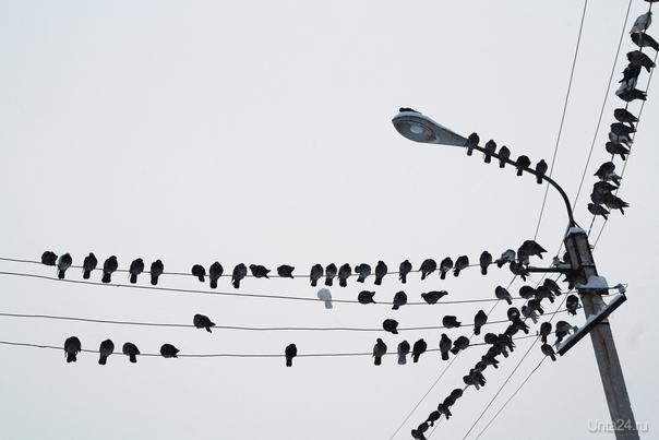 птички как ноты Улицы города Ухта