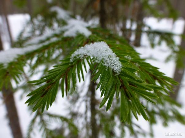 А, ведь скоро снег растает. Весна-ты тоже чудесна! Природа Ухты и Коми Ухта