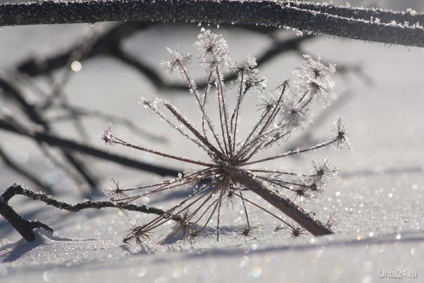 зима            Природа Ухты и Коми Ухта