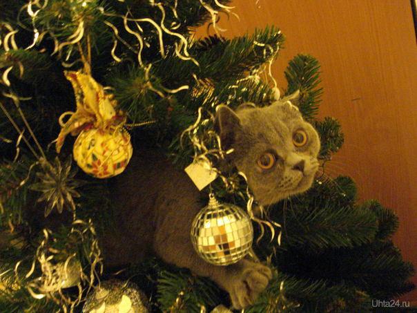 Наш кот - Елочная игрушка Питомцы Ухта