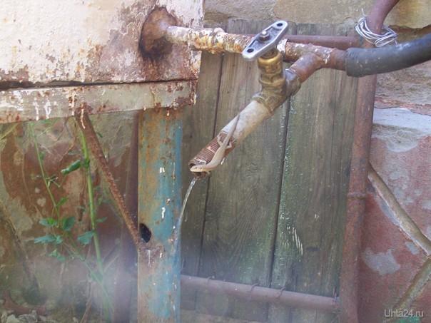 Ящерица пьёт водичку. Природа Ухты и Коми Ухта