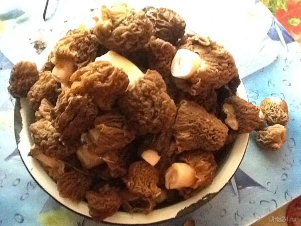 Первые грибы!!))(строчки) Мням)))) Природа Ухты и Коми Ухта