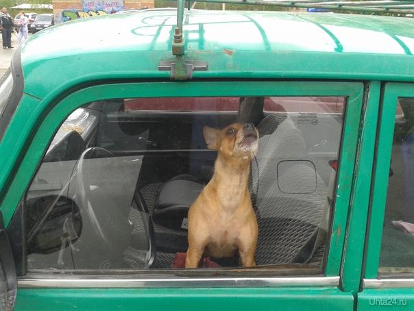 Собачья жизнь (возле пол-ки №2) Питомцы Ухта