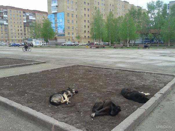 Собачья жизнь (на Комс-кой пл.) Питомцы Ухта