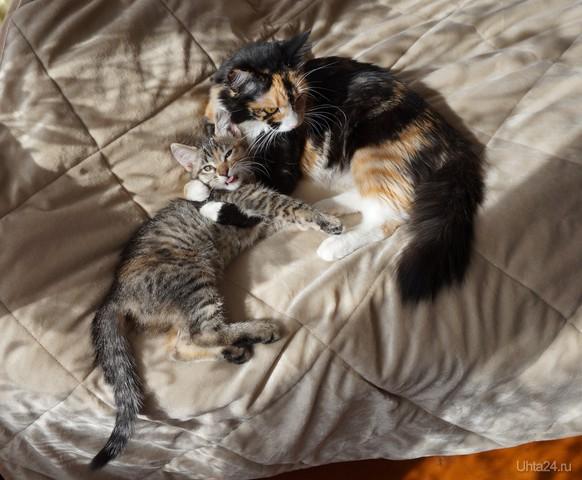 Кошка с котенком Питомцы Ухта