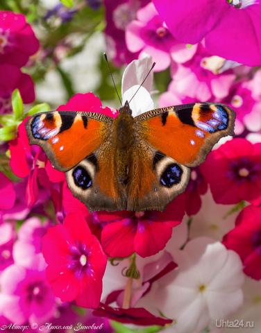 Цветная на цветном. Природа Ухты и Коми Ухта