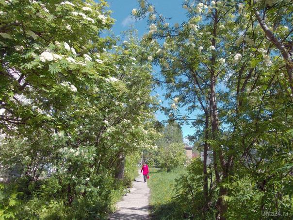 Рябиновая дорожка. Природа Ухты и Коми Ухта