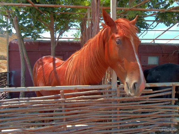 Красный Конь,ну или рыжий!!! Питомцы Ухта