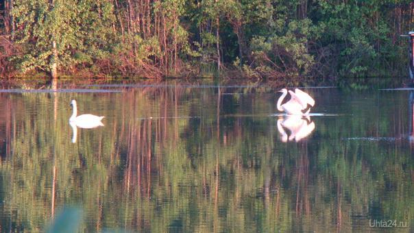 Фото сделано 02.07.14 на озере вблизи Сосногорска Природа Ухты и Коми Ухта