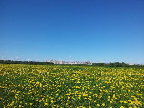 Под небом голубым есть город золотой, С прозрачными воротами и яркою звездой, А в городе том сад, все травы да цветы, Гуляют там животные невиданной красы.... Природа Ухты и Коми Ухта
