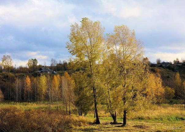 Три тополя на плющихе (снято через реку напротив памятника воинам ул.Мира) Природа Ухты и Коми Ухта