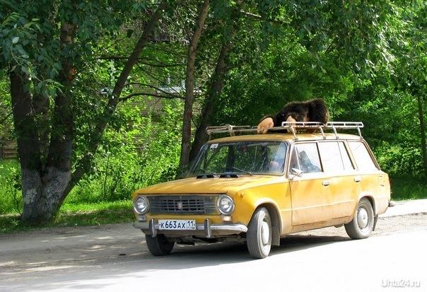 зато летом ухтинцы страдают от нашествия диких обезьян :) Разное Ухта