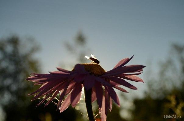 Муха на цветке  Ухта
