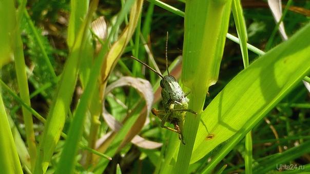 В траве сидел кузнечик,зелененький он был... Природа Ухты и Коми Ухта