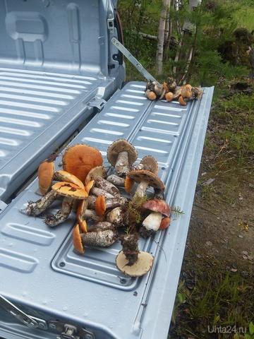 правильные грибы!!!... начало =))) Природа Ухты и Коми Ухта