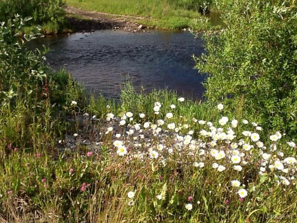 У ручья.  Лето 2014 Природа Ухты и Коми Ухта