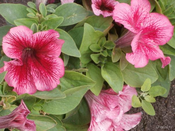 цветы Природа Ухты и Коми Ухта