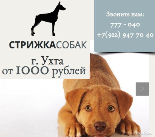 Подробности на сайте http://www.strizhkasobak.org/ СТРИЖКА СОБАК Ухта