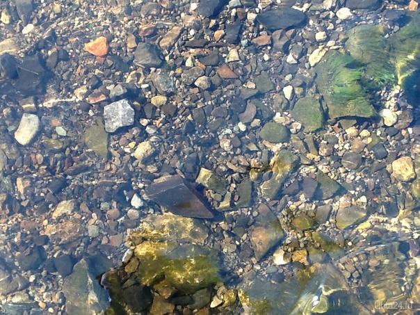 Чистота воды в ручье!)) Природа Ухты и Коми Ухта