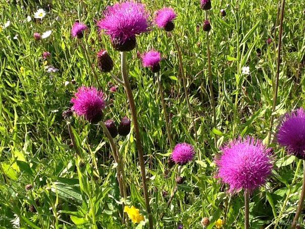 Цветет красиво. Не знаю что...( Лето2014 Природа Ухты и Коми Ухта