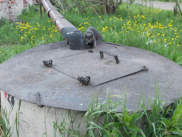 У бездомного кошака бетонный бункер возле помойки. В нем он прячется. Питомцы Ухта