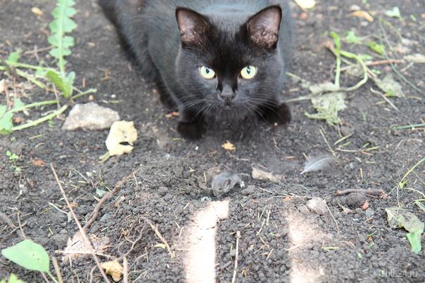 Кошки Мышки Питомцы Ухта