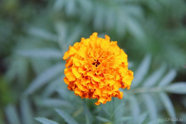 Цветы  Ухта