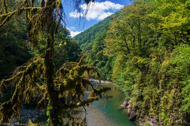 Горная река, Колхидский лес.  Ухта