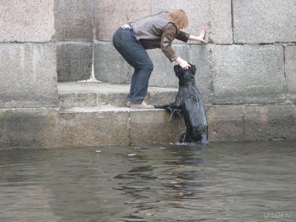 плавающая собака в Неве Питомцы Ухта