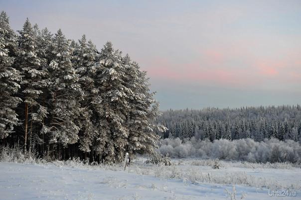 Да просто зима. Природа Ухты и Коми Ухта