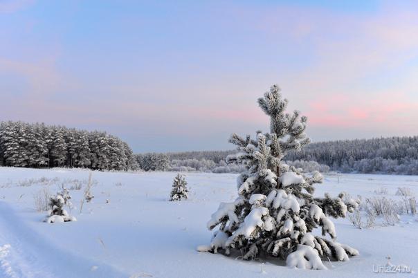 """""""Мороз снежком укутывал..."""" Природа Ухты и Коми Ухта"""