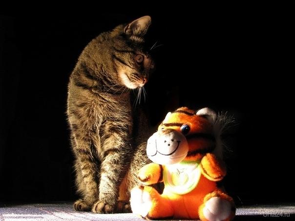 2 тигра Питомцы Ухта