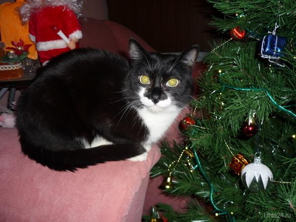 мой любимый котик Тоша Питомцы Ухта