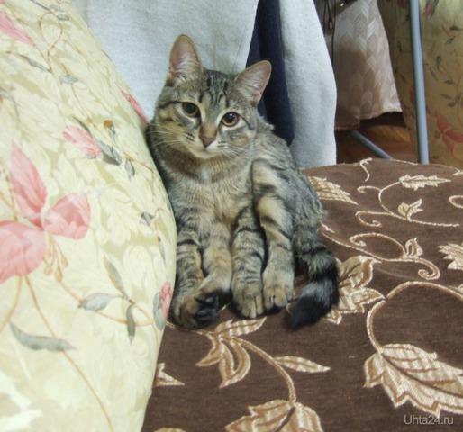 Кошка-осминошка Питомцы Ухта