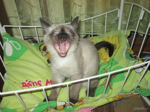 Меня будить!!!!  Ухта