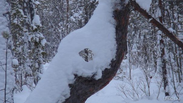 Сегодня 0 градусов, классная погода! Каталась на лыжах, и увидела такое нерукотворное окошко в природу!  Ухта