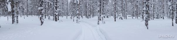 Зимний лес Природа Ухты и Коми Ухта