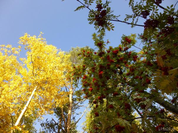 Осенние мотивы... Природа Ухты и Коми Ухта