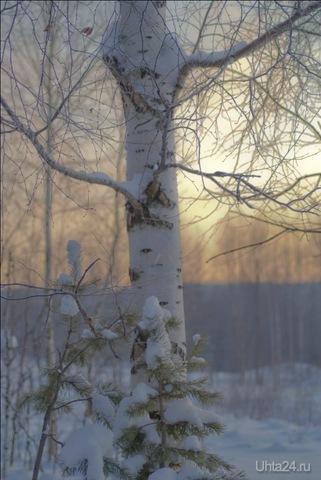 Береза замерзла Природа Ухты и Коми Ухта