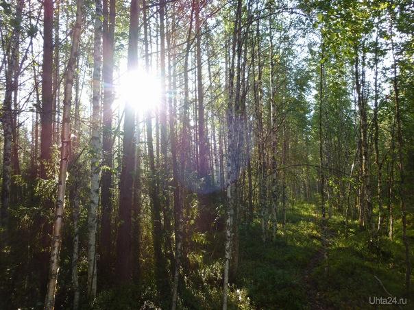 Тропинка в лесу... Природа Ухты и Коми Ухта
