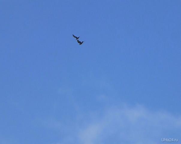 Меня всегда поражали птицы. Их синхронность полета.Они парят.Вместе.Рядом.Разве это не чудо. Разное Ухта