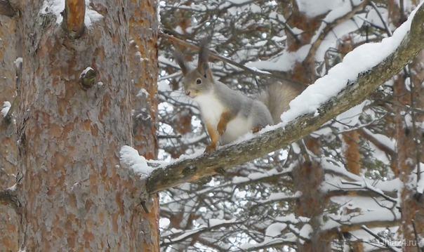 С последним днем зимы!!! Природа Ухты и Коми Ухта