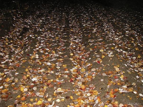 Листья жёлтые. Листья красные. Дни пригожие, дни ненастные. Скоро вновь зима, не заблудится. Что-то сбудется, что забудется... Природа Ухты и Коми Ухта