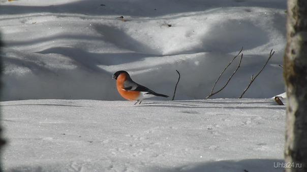 Прогулка по снегу. Природа Ухты и Коми Ухта