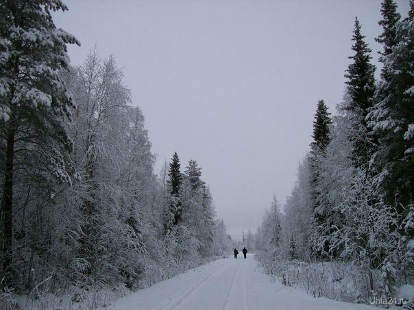 просто зима Природа Ухты и Коми Ухта