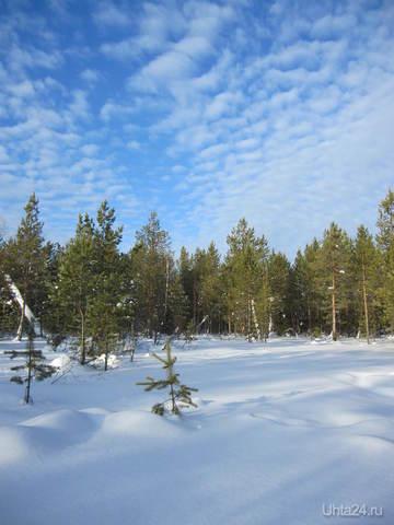А что,скажите,может лучше быть,чем просто погулять по лесу,и насладиться тишиной, смотреть на облака, и на такую чистую засНЕЖНОСТЬ. Природа Ухты и Коми Ухта