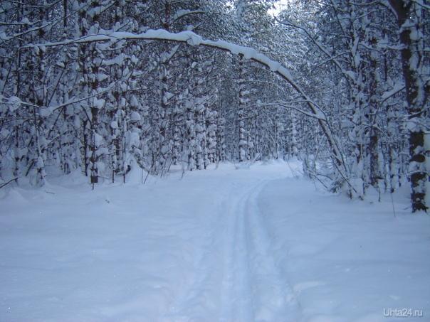 январь 2010 г. Природа Ухты и Коми Ухта