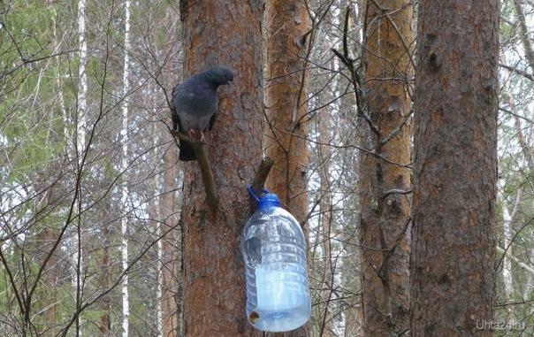 Голубь:Кормушку вижу, остальное нет.                          А я вспомнила мультик про Машу и медведя, как она говорит:Сейчас мы вкусно покушаем,сейчас нас  покормят.Давайте же покормим мы,все вместе, ведь сколько висит кормушек,а птицы будут только рады.  Ухта