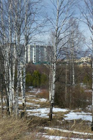 Город в просвете между деревьев Природа Ухты и Коми Ухта